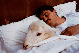 Hara - man sleeping next to sheep